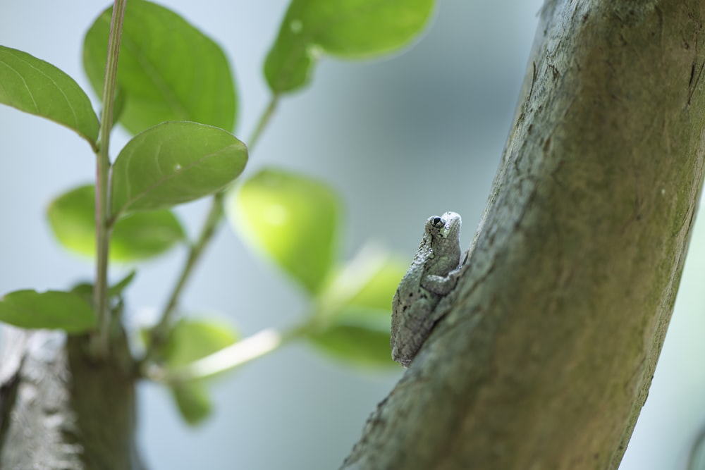 green frog on tree branch