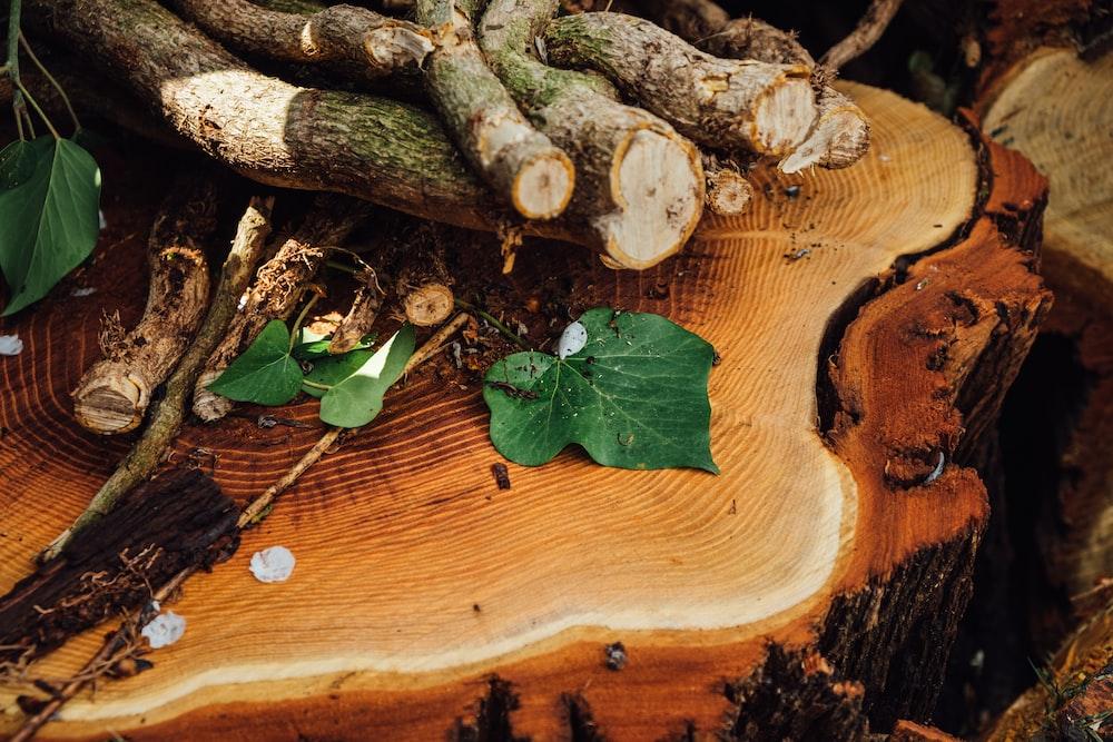 brown wood log with green leaves