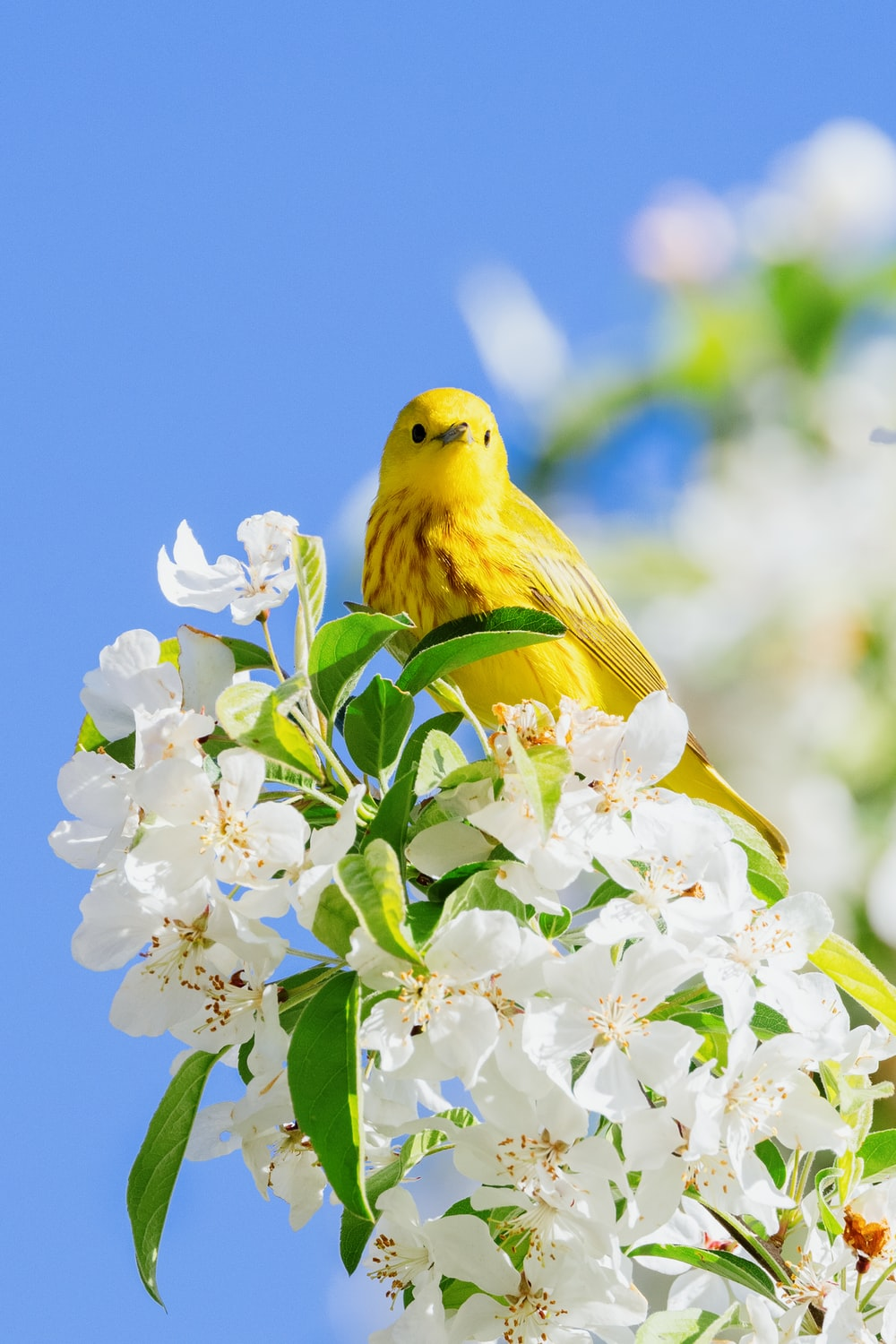 yellow bird perched on white flower