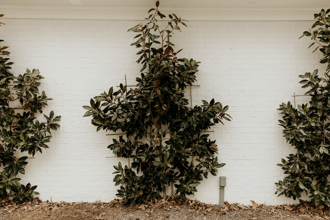 Green and Brown Plant Beside White Wall - unsplash