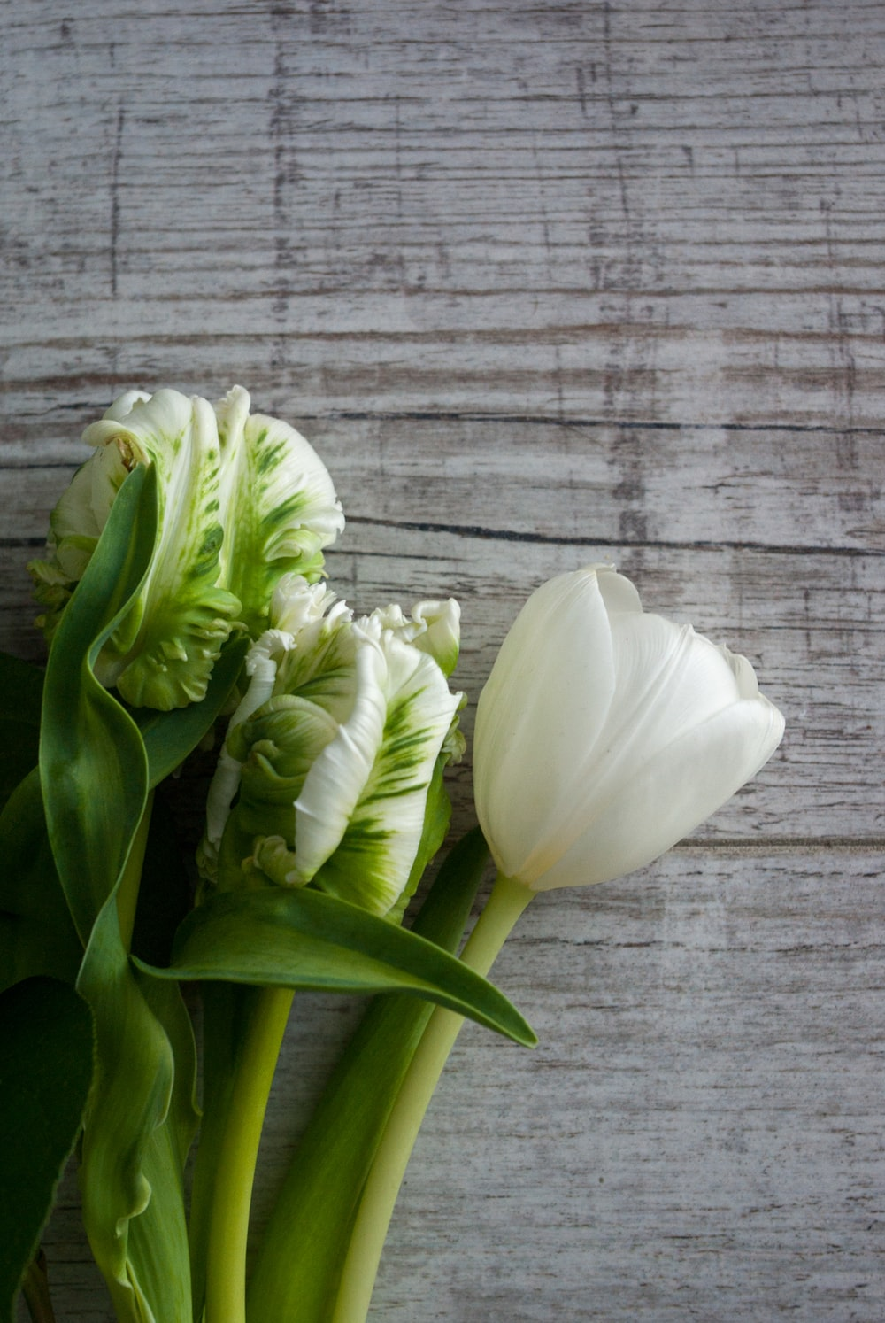 white tulips on gray wooden surface