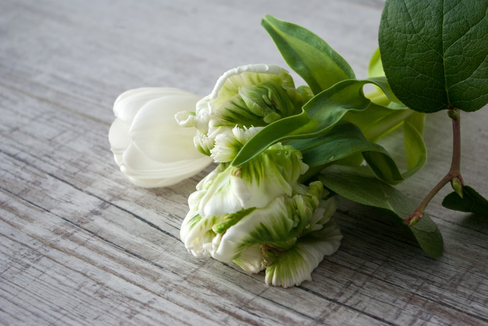 white tulips on brown wooden table
