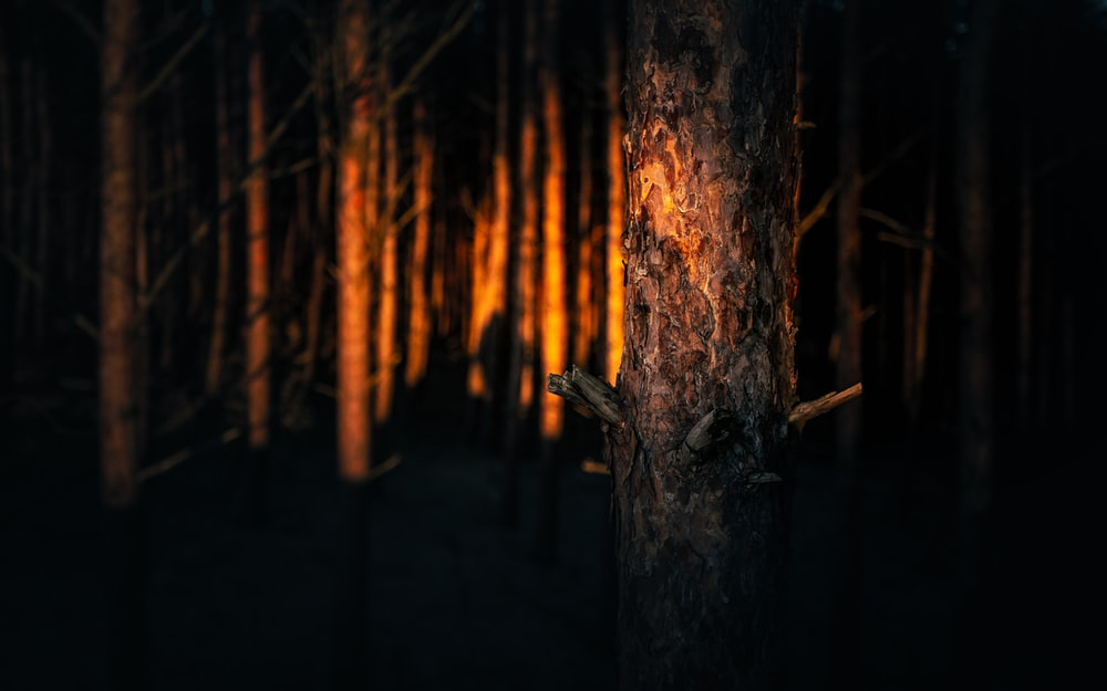 brown tree trunk during night time