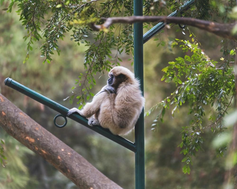 brown monkey on gray metal bar during daytime