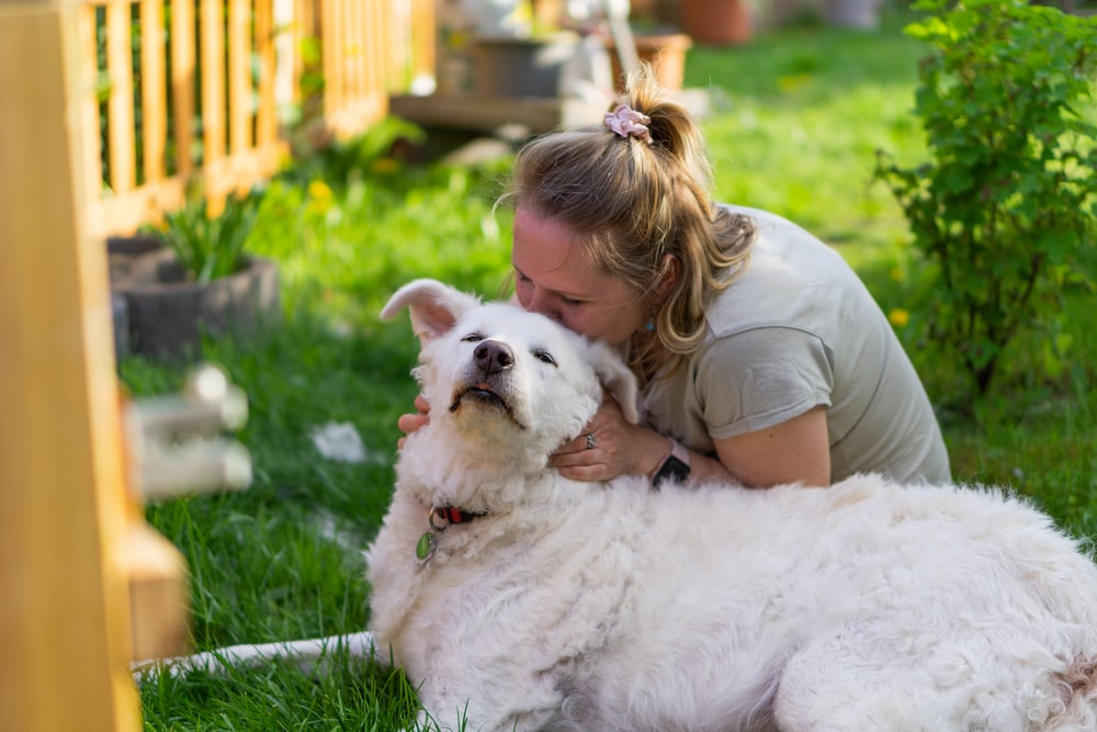 girl in brown shirt lying on white dog on green grass during daytime