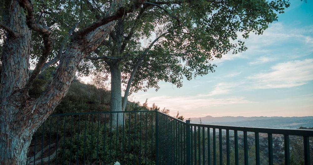 green tree near black metal fence during daytime
