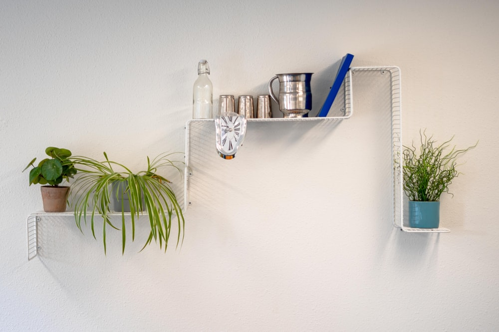 green potted plant on white wall shelf