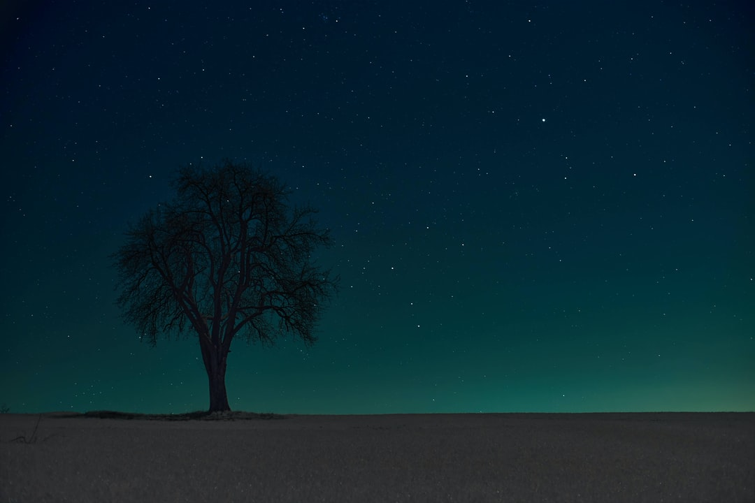Bare Tree Under Blue Sky During Night Time - unsplash