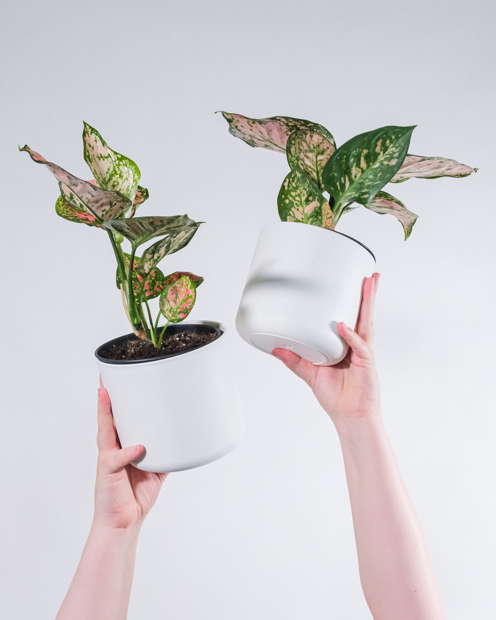 person holding white ceramic pot with green plant