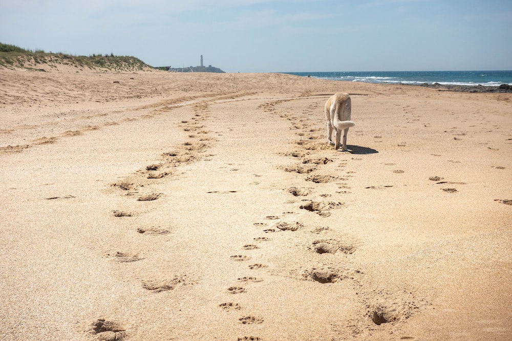 white short coat dog on brown sand near body of water during daytime