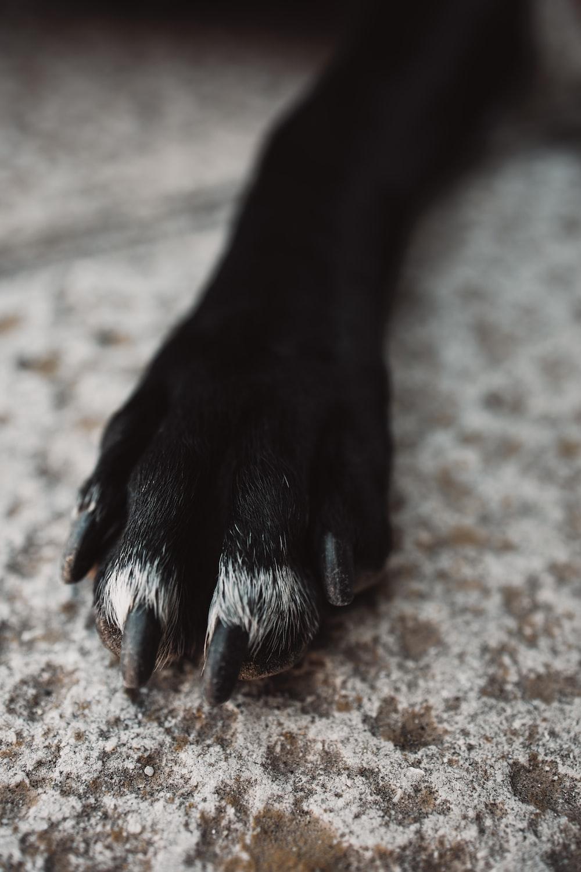 black short coat dog paw