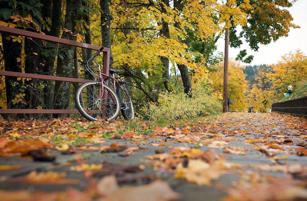 black bicycle on brown dried leaves on ground