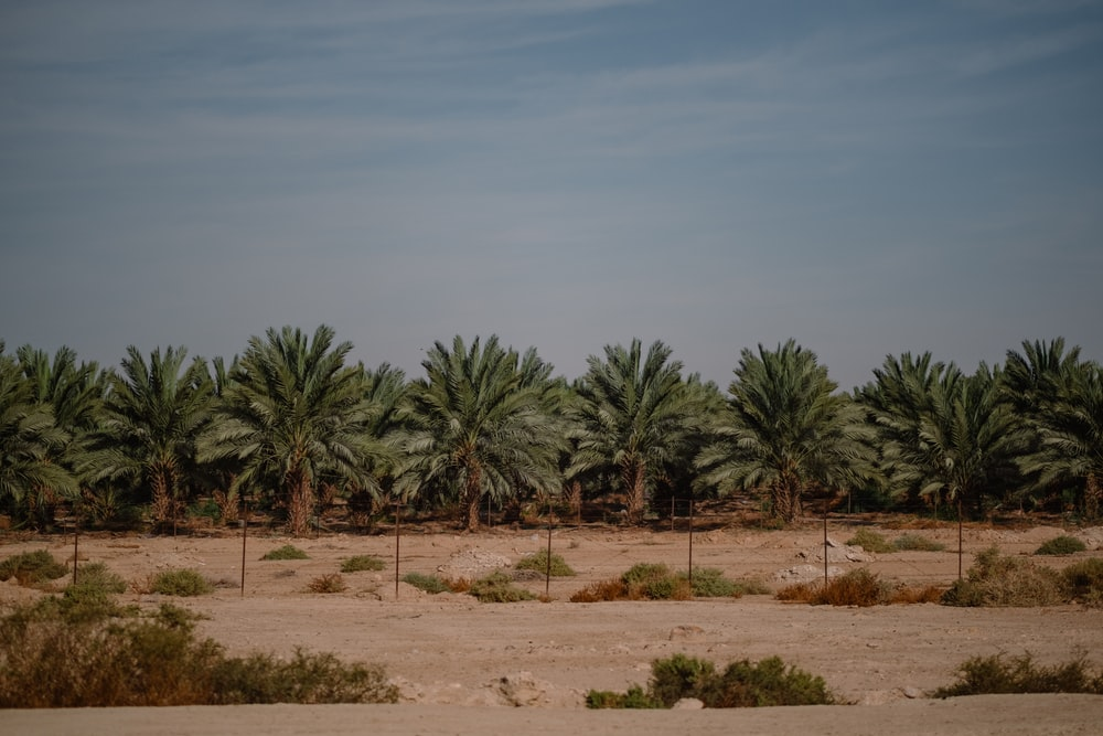 green palm trees on brown sand under blue sky during daytime