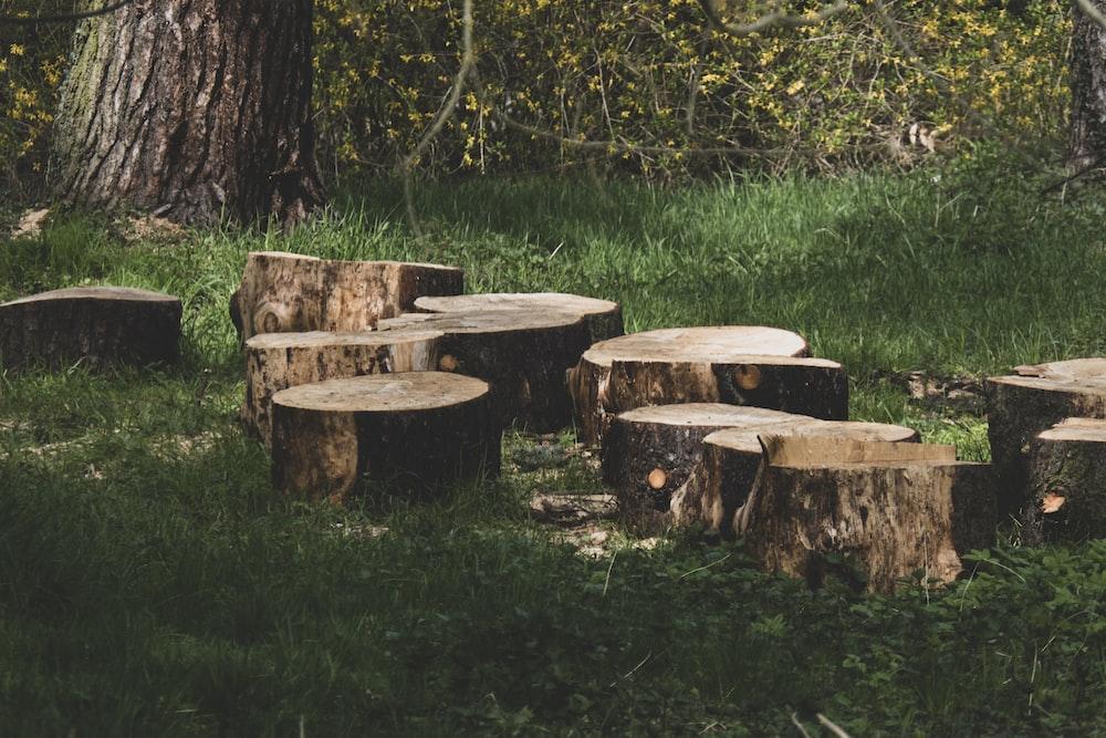 brown wooden log on green grass field