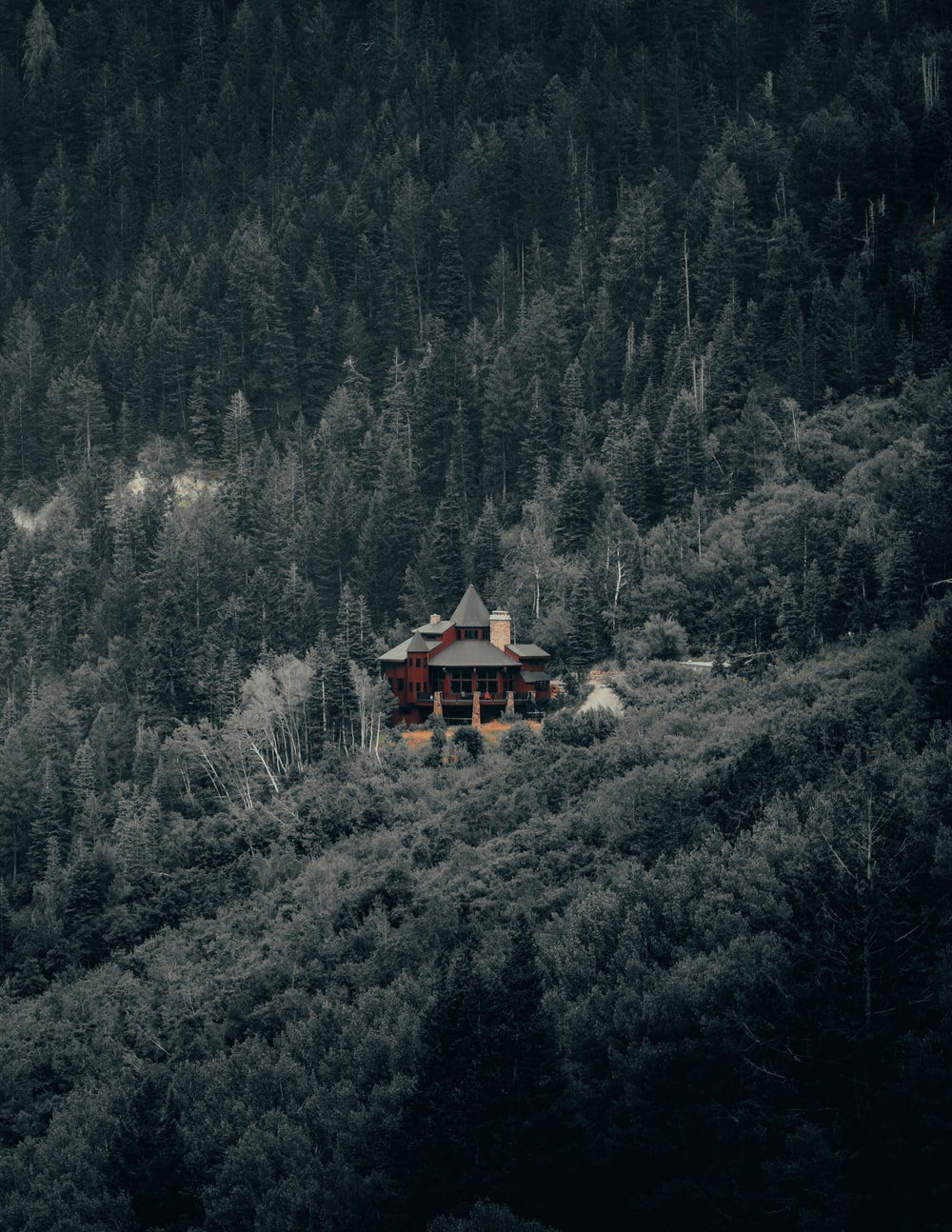 brown wooden house on forest during daytime
