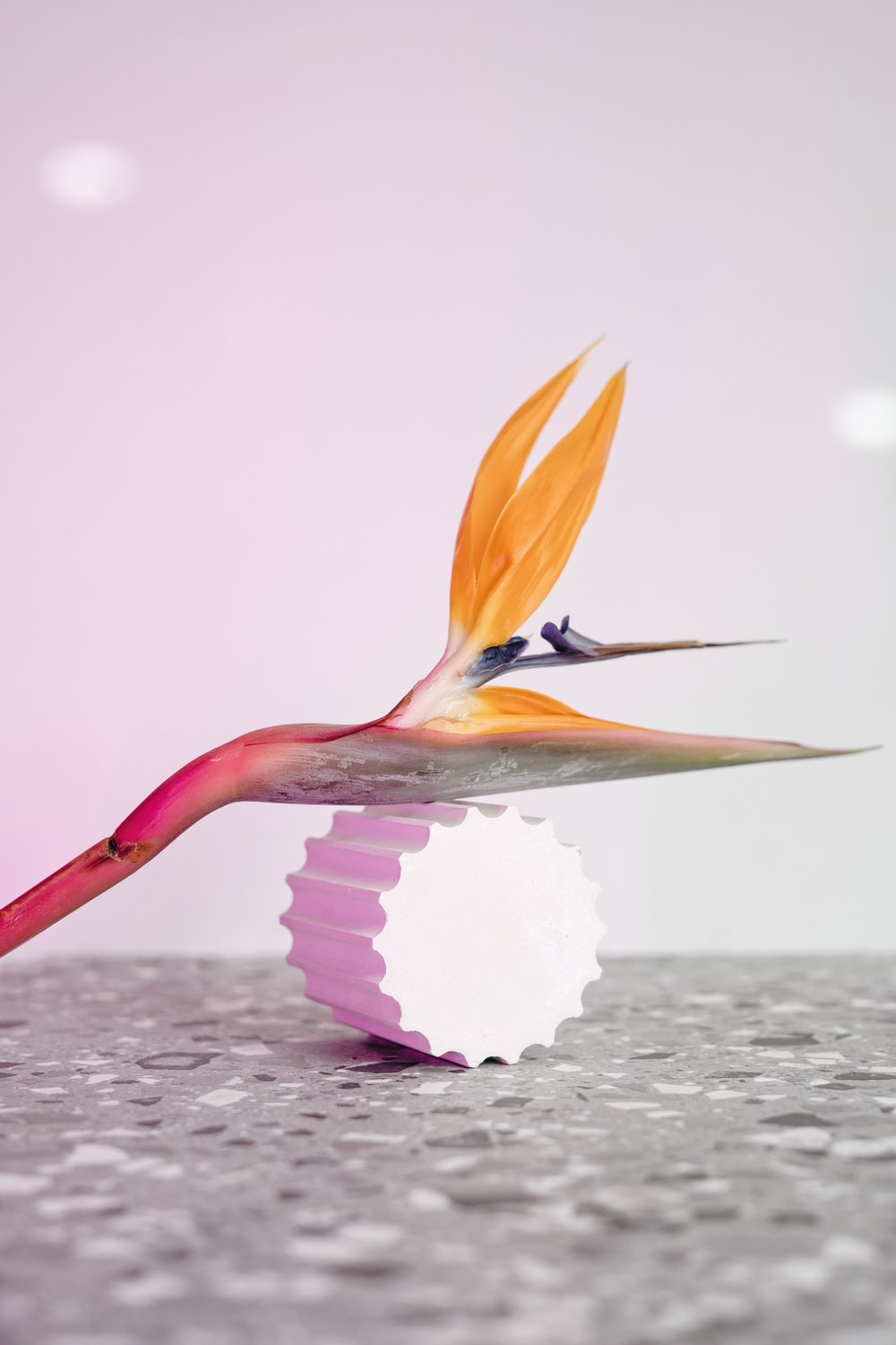 white and brown bird on pink and white textile
