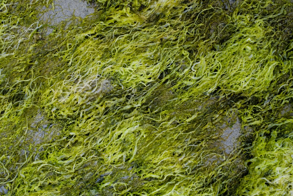 green moss on body of water