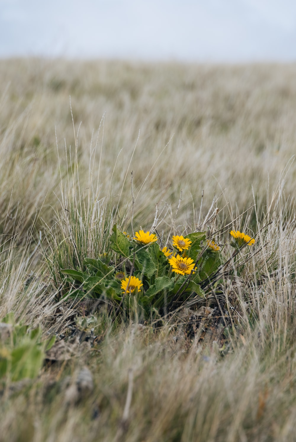 yellow and black flowers on brown grass field