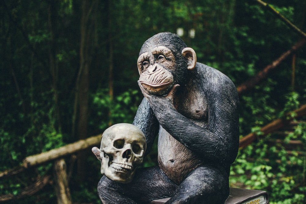 black gorilla sitting on tree branch