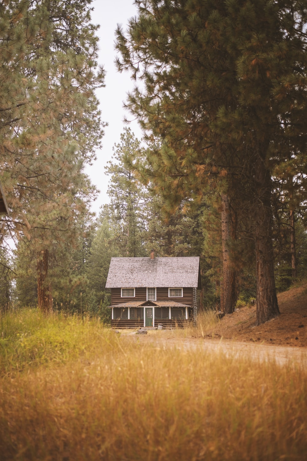 brown wooden house in the middle of forest during daytime