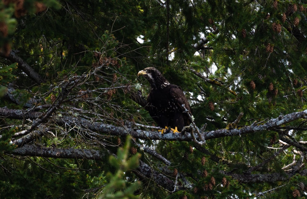 brown and white eagle on tree branch during daytime