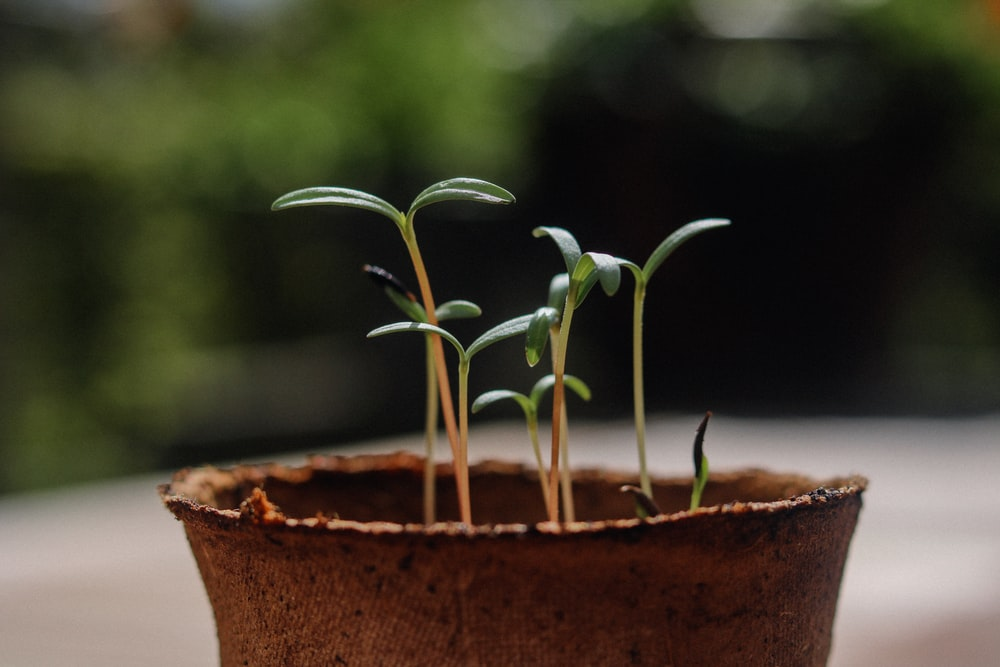green plant in brown clay pot