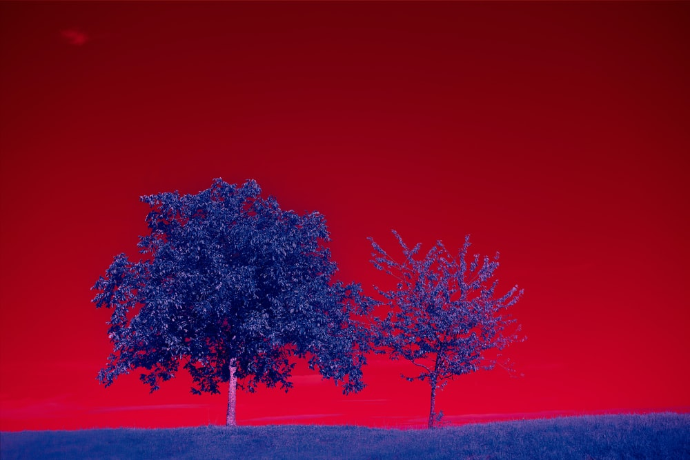 red leaf tree on brown field under blue sky during daytime