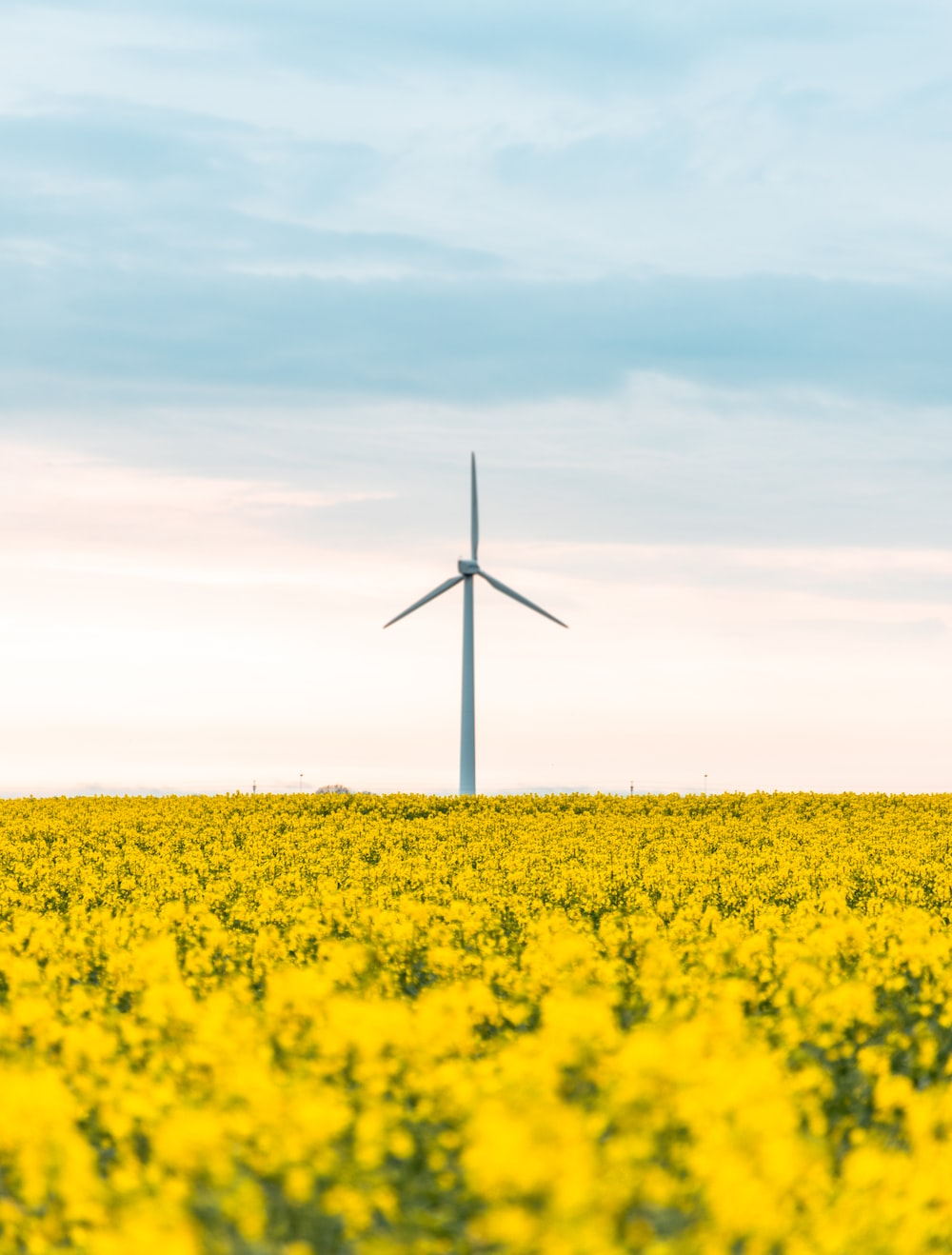 wind turbines on yellow flower field under white clouds and blue sky during daytime