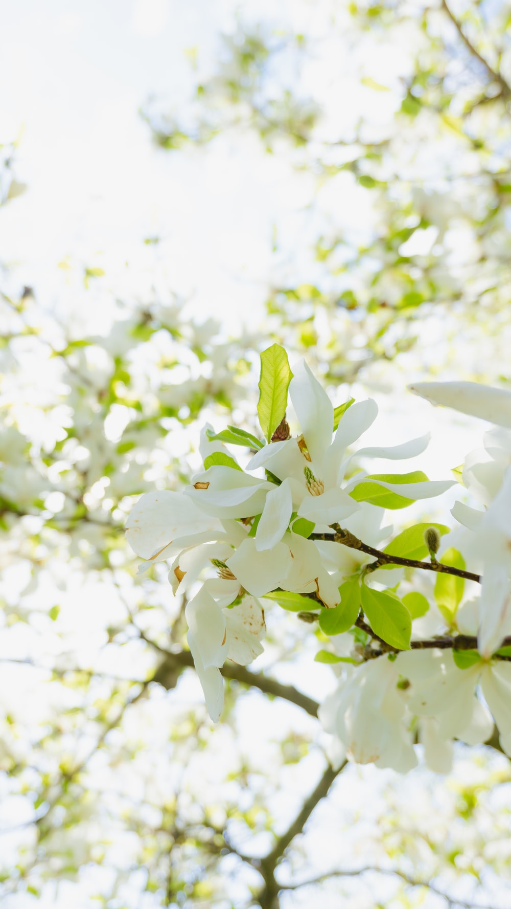 white flowers with green leaves during daytime
