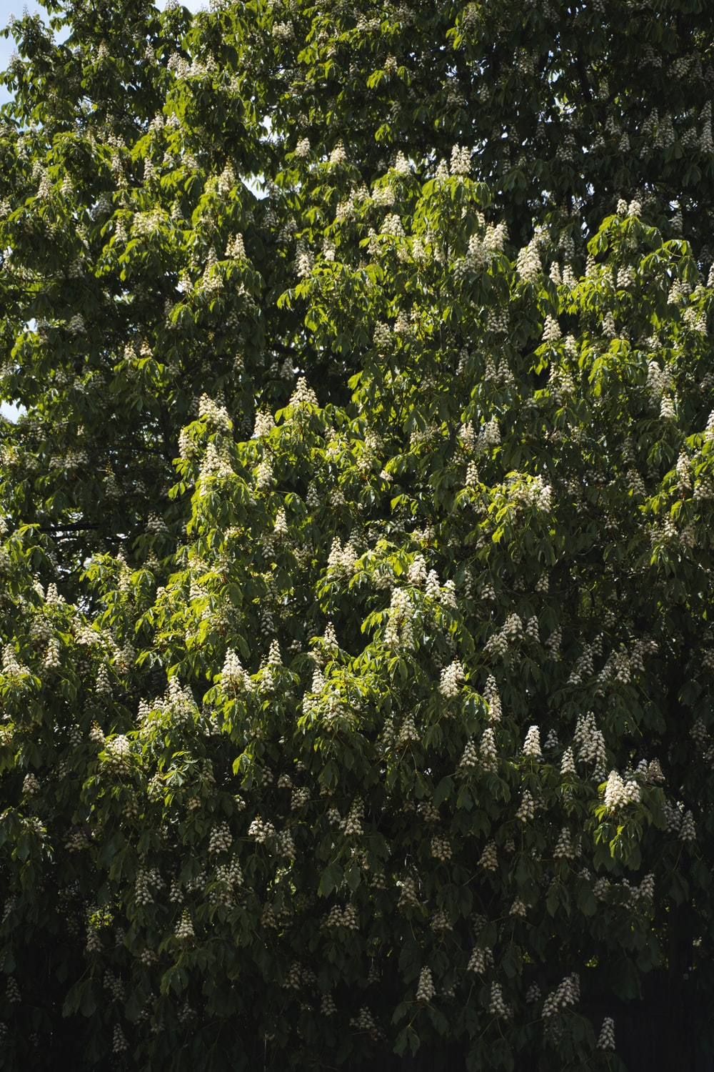 green tree with white flowers