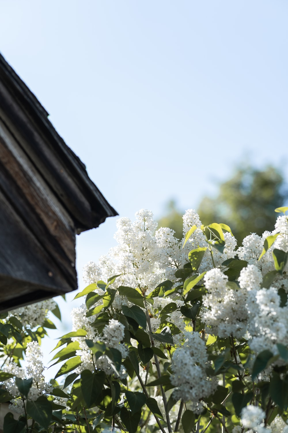 white flowers on brown wooden roof