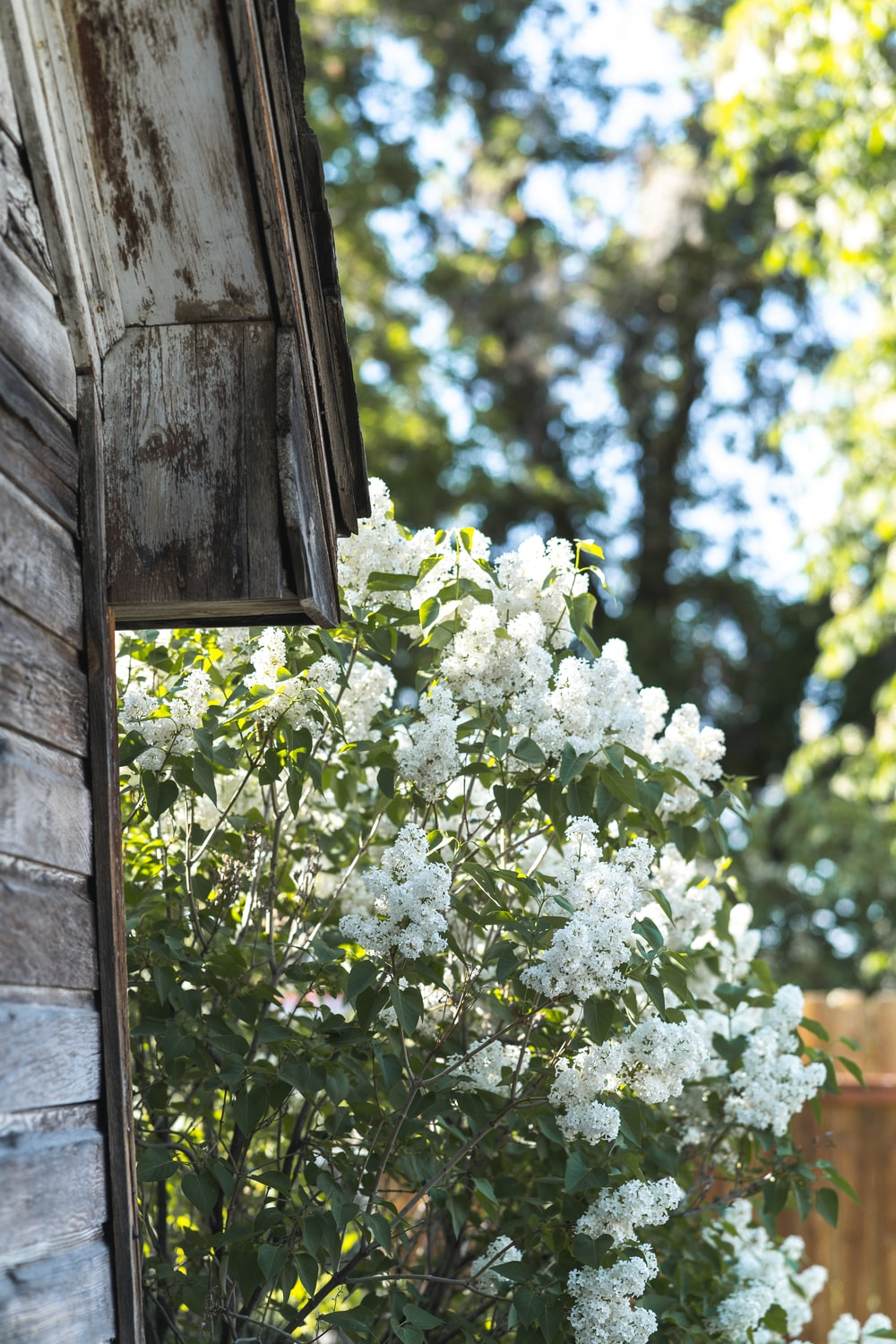 white flowers on brown wooden window