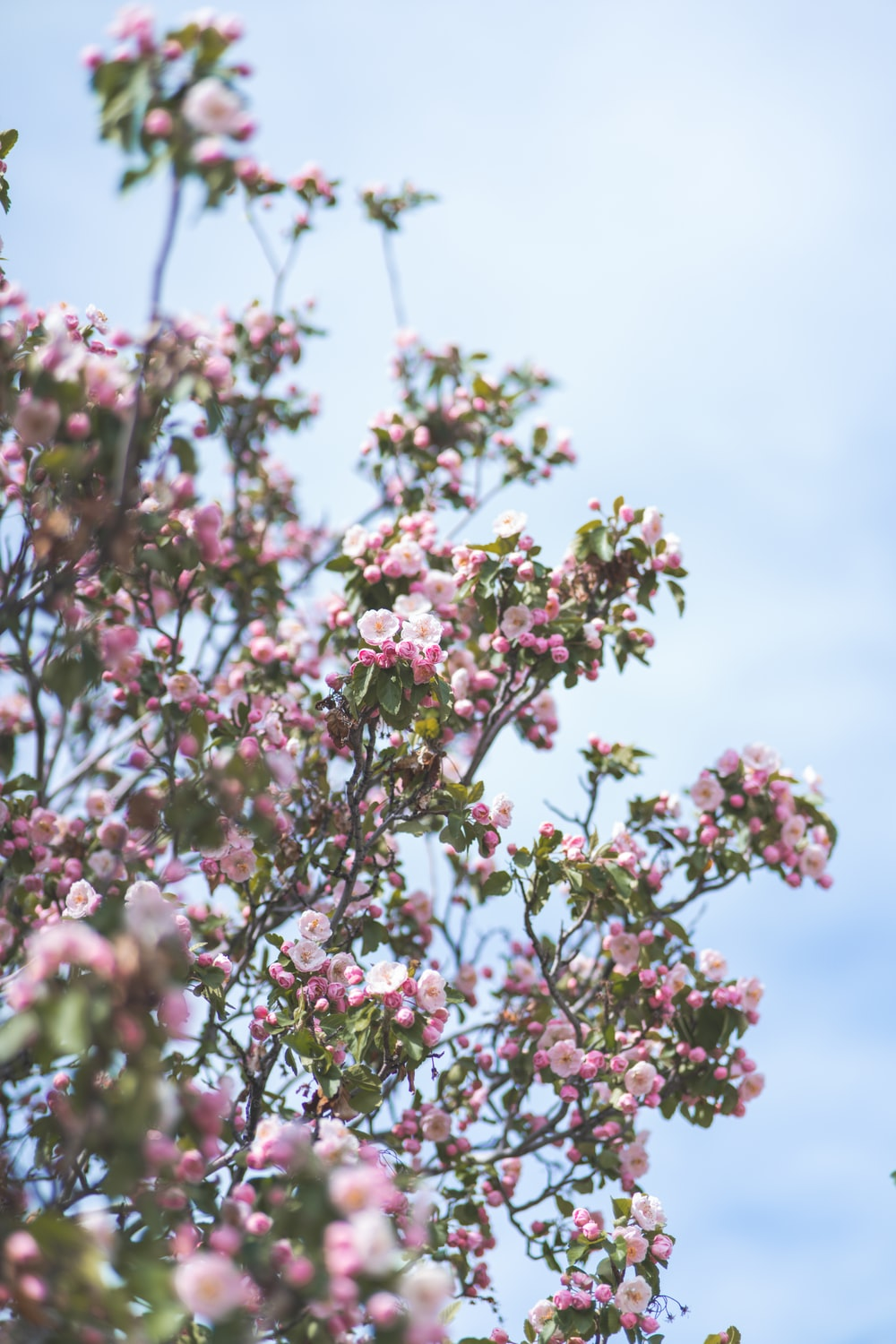pink flowers with green leaves under blue sky and white clouds during daytime