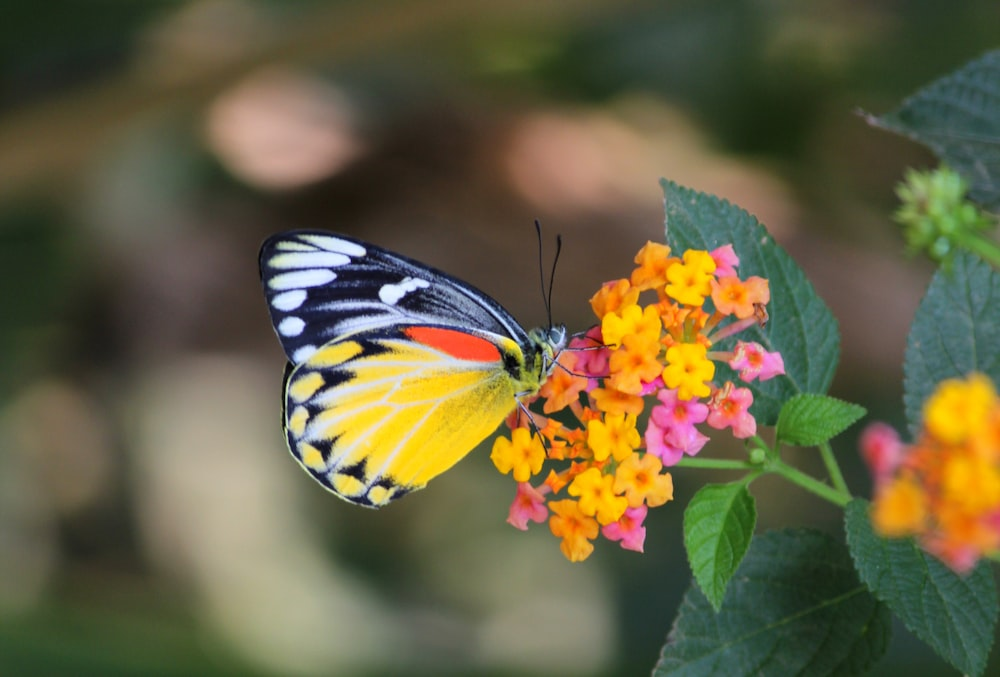tiger swallowtail butterfly perched on yellow and red flower in close up photography during daytime
