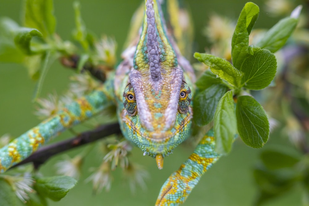 green and blue dragon on tree branch