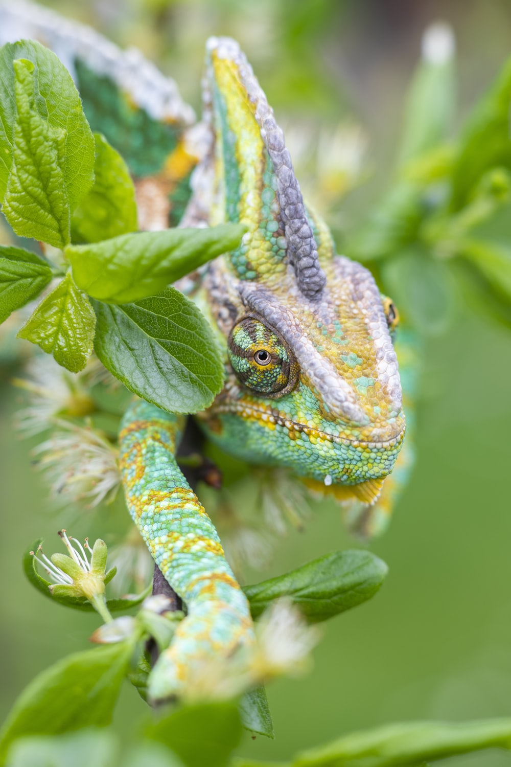 green and blue chameleon on green plant