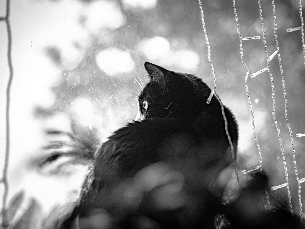 grayscale photo of cat on grass