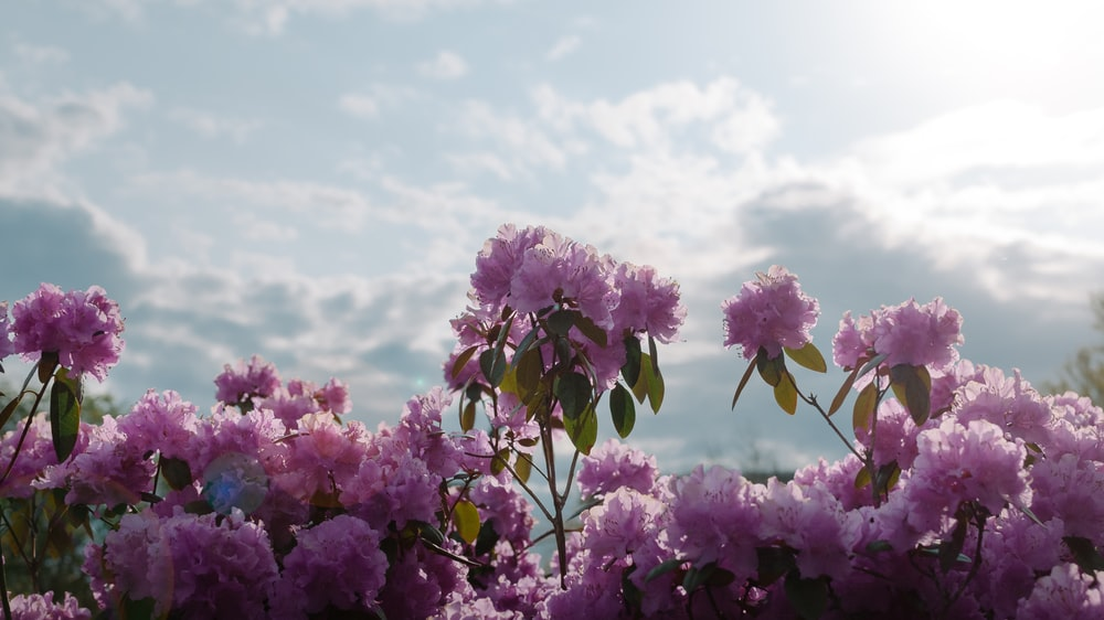 purple flowers under blue sky during daytime
