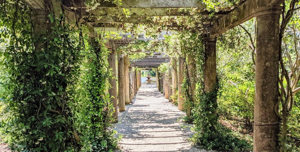 gray concrete pathway between green plants