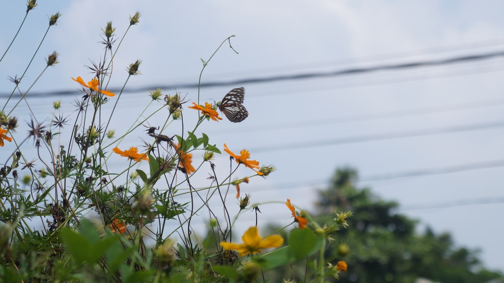 brown and white butterfly on yellow flower during daytime