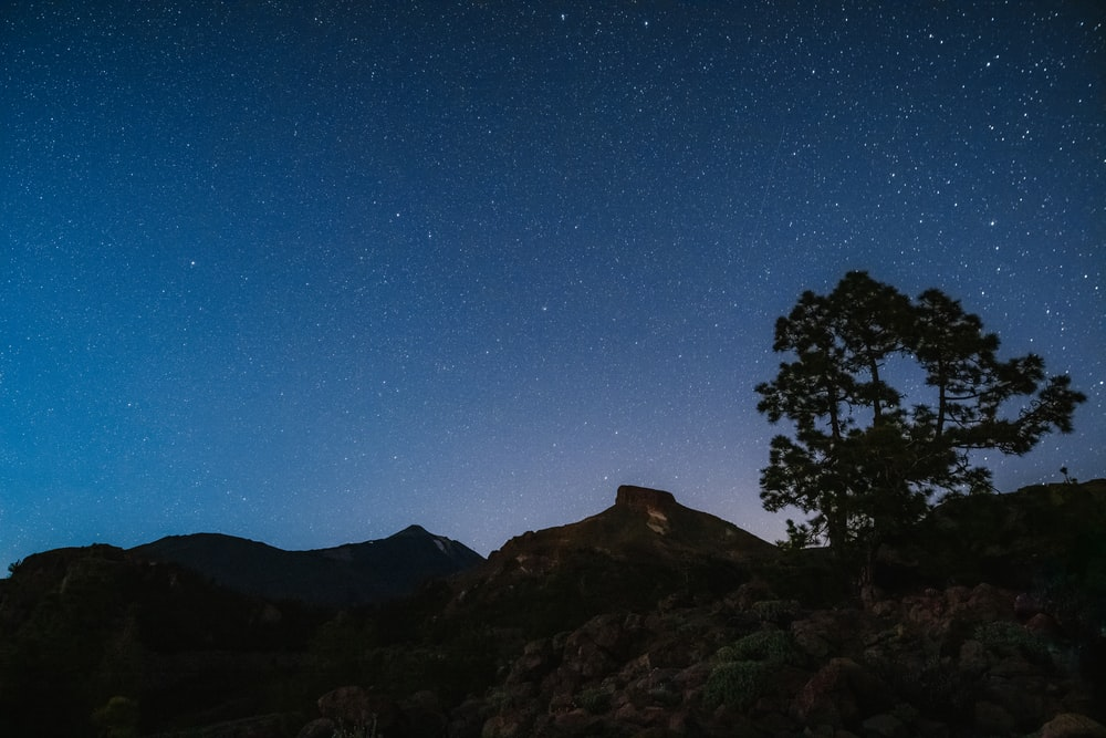 silhouette of trees on mountain under blue sky during night time
