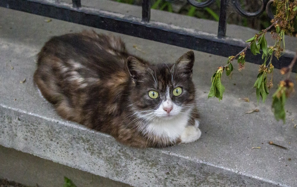 brown and white cat on gray concrete floor