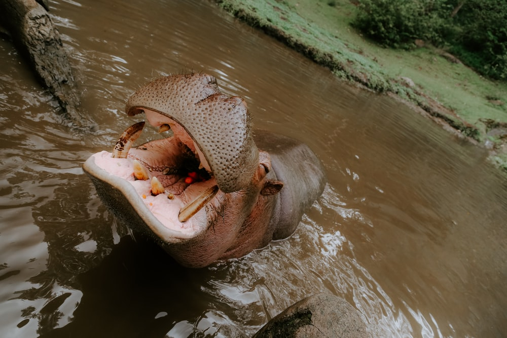brown animal on body of water during daytime