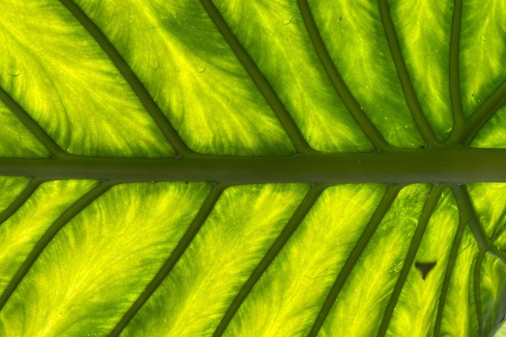 yellow and green banana leaf