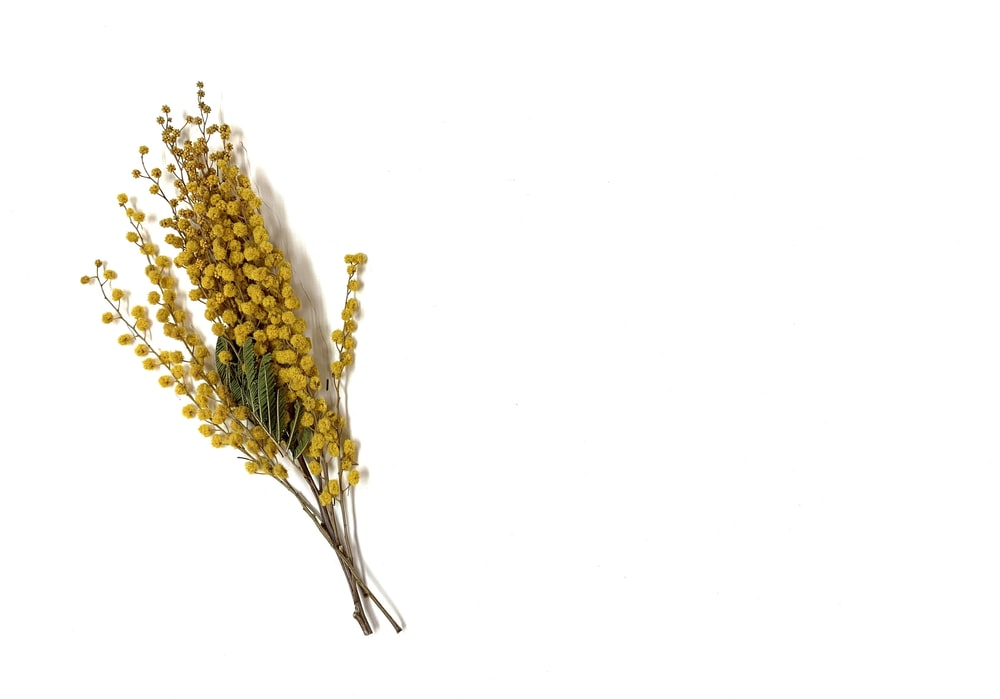 yellow and white flower on white background