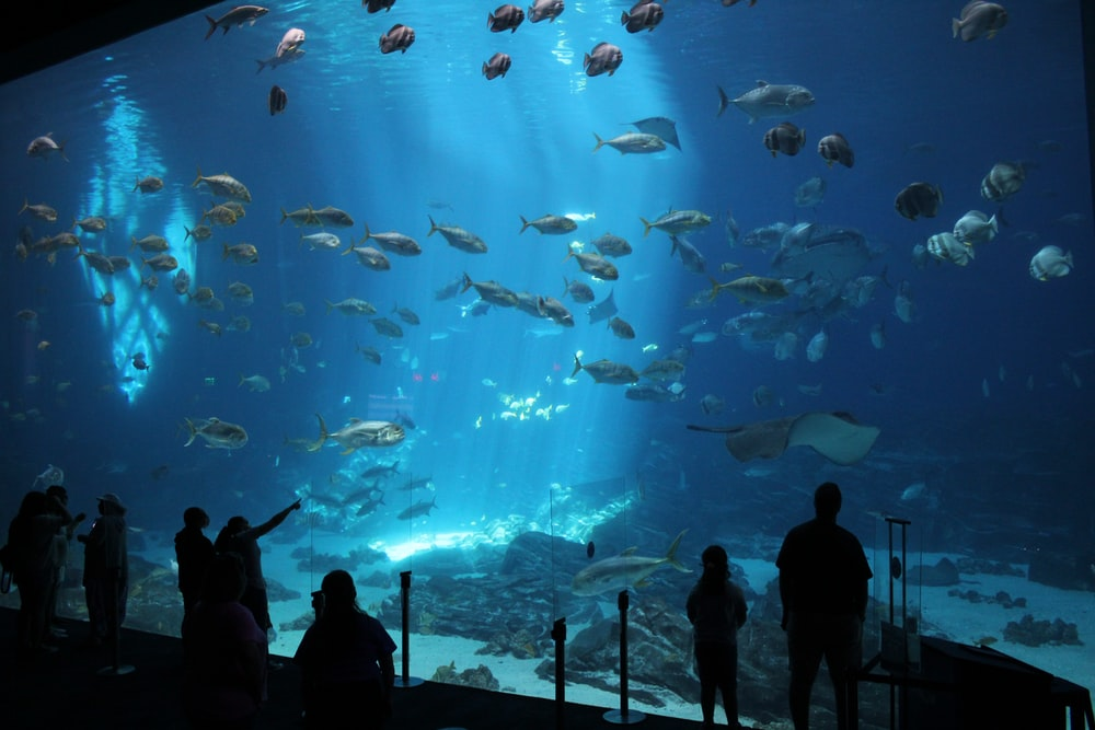 silhouette of people standing near fish tank