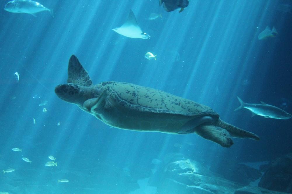 brown turtle under water during daytime