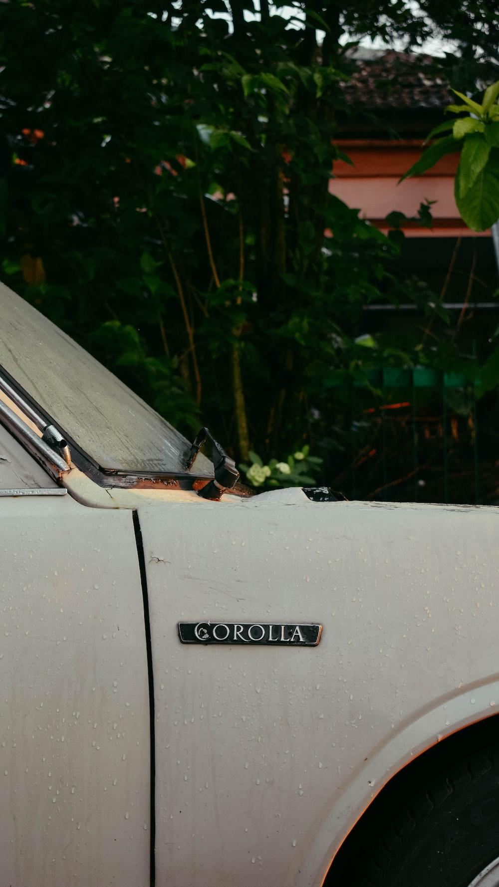 white car near green plants
