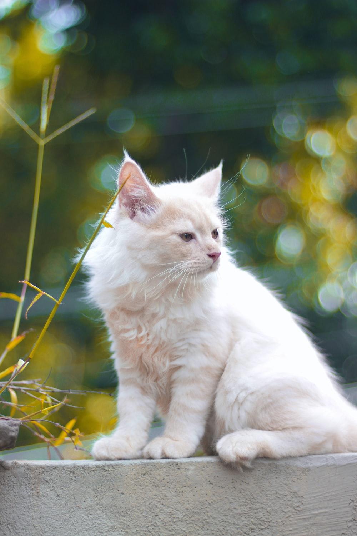 white cat on yellow flowers