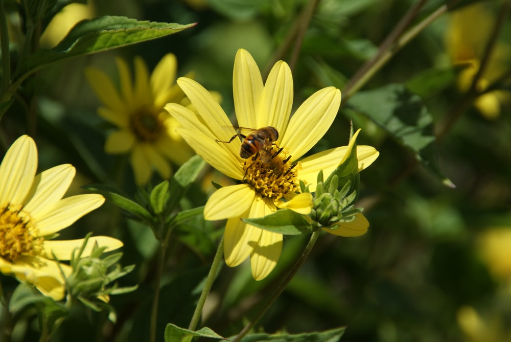 yellow flower with bee on top
